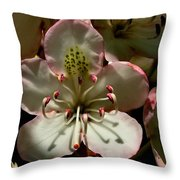 Pretty Pink Throw Pillow