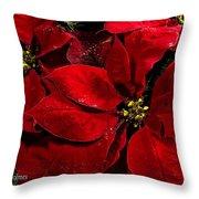 Pretty Poinsettias  Throw Pillow