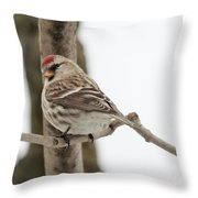 Pretty Redpoll Throw Pillow
