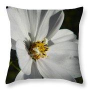 Pretty White Cosmos Throw Pillow