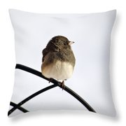 Pretty Winter Junco Throw Pillow by Christina Rollo