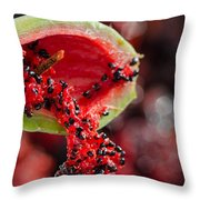 Prickly Pear Cactus Throw Pillow