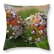 Prickly Pear With Cochineal Bugs Throw Pillow