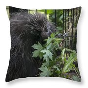 Prickly Pete Throw Pillow
