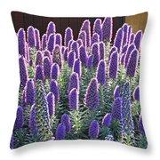Pride Of Madeira  7162 Throw Pillow