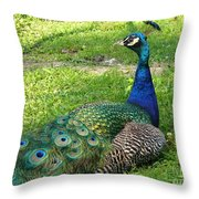 Pride Of Peacock Throw Pillow