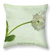Primula Denticulata Alba Throw Pillow