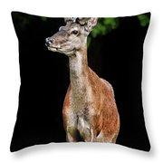 Prince Buck Throw Pillow by Mariola Bitner