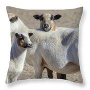 Professional Sheep Throw Pillow