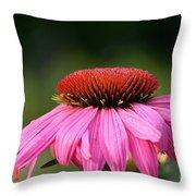 Profiling Echinacea Throw Pillow