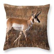 Pronghorn Antelope 2 Throw Pillow