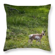 Pronghorn Antelope Among Wildflowers Throw Pillow