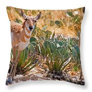 Pronghorn Antelope Throw Pillow