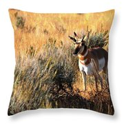 Pronghorn Buck Throw Pillow