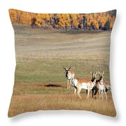 Pronghorn In The Park Throw Pillow