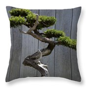 Prostrate Juniper Bonsai Tree Throw Pillow