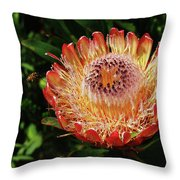Protea Flower 2 Throw Pillow