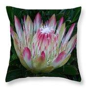 Protea Flower Throw Pillow