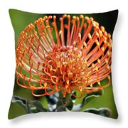 Protea - One Of The Oldest Flowers On Earth Throw Pillow