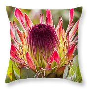 Protea Sugarbush Throw Pillow
