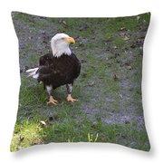 Proud Bald Eagle  Throw Pillow