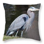 Proud Great Blue Heron Throw Pillow