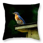Proud Provider Throw Pillow