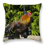Proud Rooster Throw Pillow