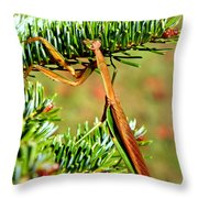 Prying Mantis On The Pine Tree Throw Pillow