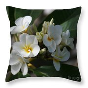 Pua Melia Na Puakea Onaona Tropical Plumeria Throw Pillow
