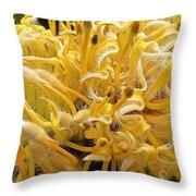 Wild Hairs Pua'ala Protea Throw Pillow
