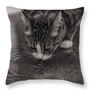 Puddle Drinking Kitty Throw Pillow