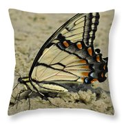 Puddling Eastern Tiger Swallowtail Butterfly Throw Pillow