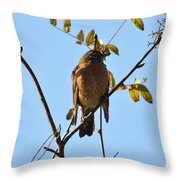 Puffed Breasted Robin Throw Pillow