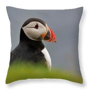 Puffin In Iceland Throw Pillow