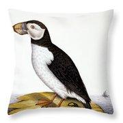 Puffin, Marmon Fratercula, Circa 1840 Throw Pillow