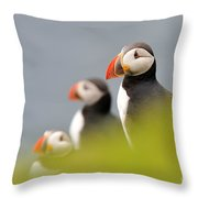 Puffins In Iceland Throw Pillow