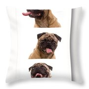 Pug Photo Booth Throw Pillow