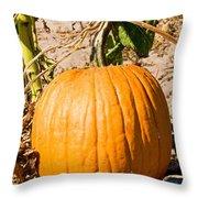 Pumpkin Growing In Pumpkin Field Throw Pillow