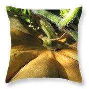 Pumpkin Ripe Throw Pillow