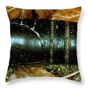 Pupa Of A Regal Moth Citheronia Regalis Throw Pillow