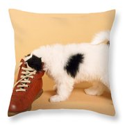 Puppy Dog With Head In Red Shoe Throw Pillow