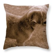 Cute Puppy Throw Pillow