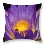 Purple And Bright Yellow Center Waterlily... Throw Pillow