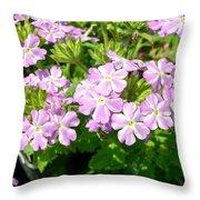 Purple And White Phlox Throw Pillow