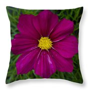 Purple And Yellow Brilliance Throw Pillow