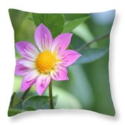 Purple And Yellow Dahlia Throw Pillow
