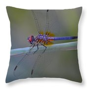 Purple And Yellow Dragonfly On Navarre Beach Throw Pillow