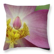 Purple And Yellow Orchid Throw Pillow