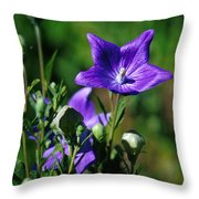 Purple Balloon Flower Throw Pillow